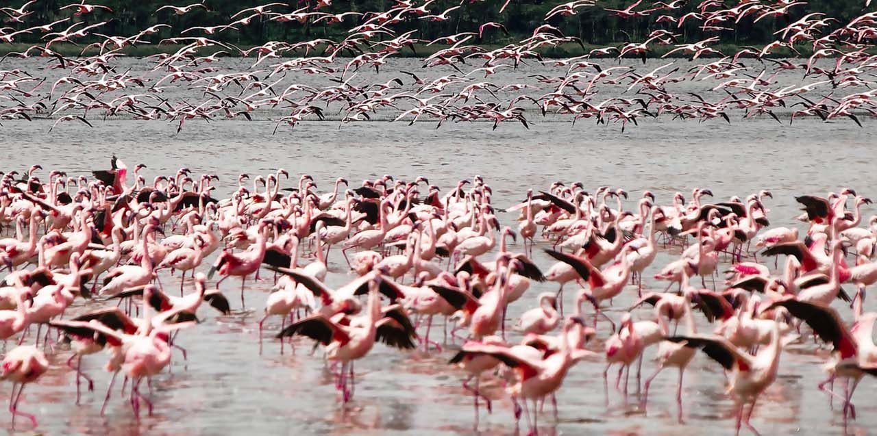https://popoteafrica.com/wp-content/uploads/2020/08/lake-nakuru-3-1280x637.jpg