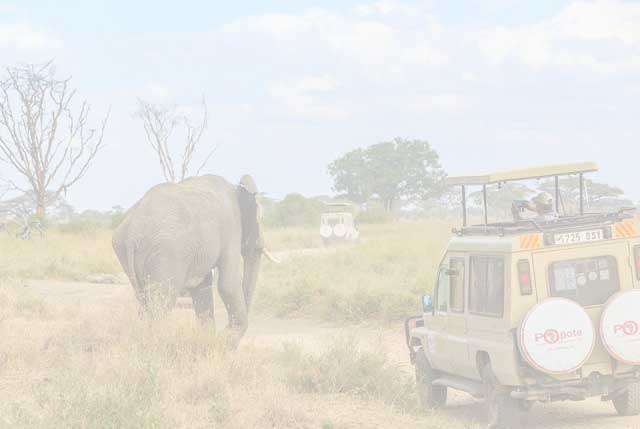 Arusha National Park Day Tour
